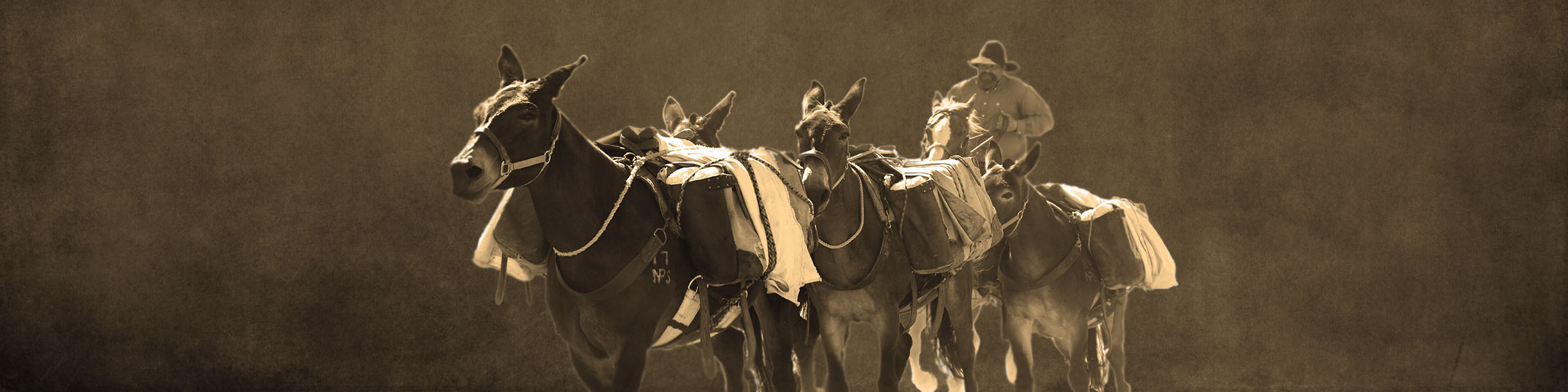 Mule Days Celebration, Bishop California - homepage banner