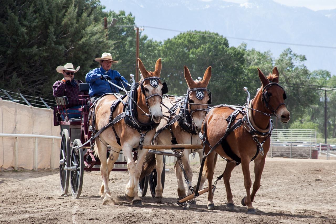mule wagon