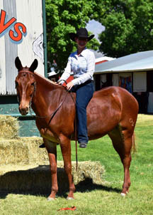 2017 Adult Amateur Reserve World Champion Amended